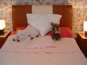 Single Bed + Folding single Bed also double bed set/tables/bedding/box